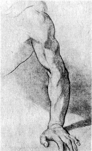 А. П. Лосенко. Рисунок руки.