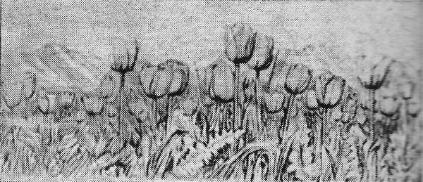Р. Эйхорн Из серии «Читая Чингиза Айтматова» 1979 г. Цветной офорт